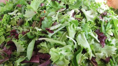 Image : Mesclun - Salade mesclun