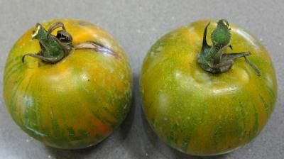 Tomates Green Zebra