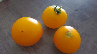 Tomates mandarin