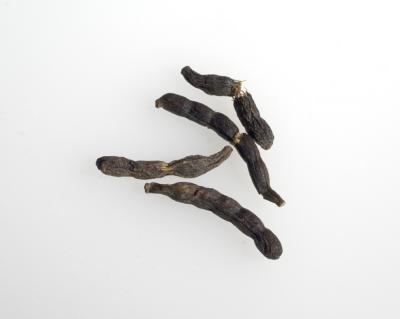 Image : Xylopia aethiopica - Xylopia aethiopica