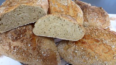 Levain sans gluten à la farine de sarrasin : Pains au cidre
