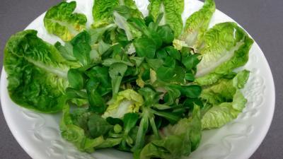 Salade de châtaignes - 6.1