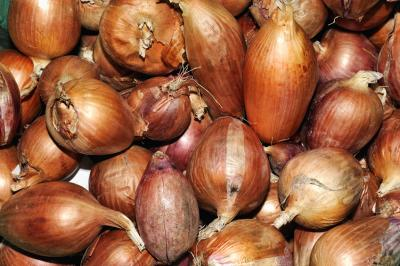 Image : Oignon patate - oignon patate