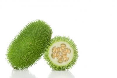 Image : Concombre des antilles - Concombre des antilles