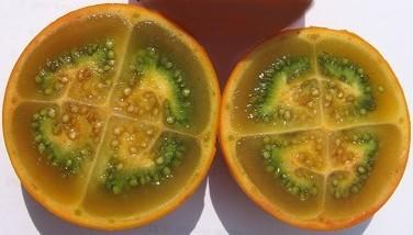 Photo : Narangille