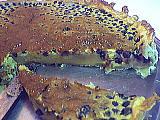 Image : Clafoutis aux myrtilles