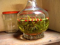 poivre vert : Estragon et vinaigre