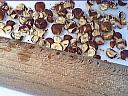 Croustade au chocolat - 7.2