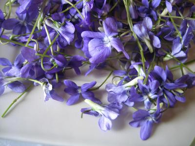 Image : Fleur - Fleurs de violettes