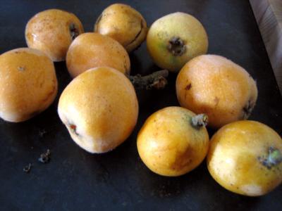 Image : Nèfle japonaise - Nèfles japonnaise