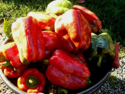 Image : Cuisine hongroise - Plat de poivrons rouges
