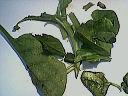 Salade d'épinards tièdes aux moules et son coulis de ciboulette - 11.1