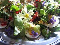 Olive : Assiette de violettes et primevères en salade