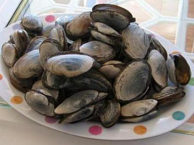 Image : Clam - Assiette de clams
