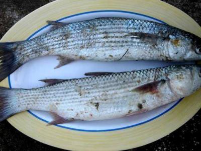 Image : Vitamine B12 - Un plat de mulets frais