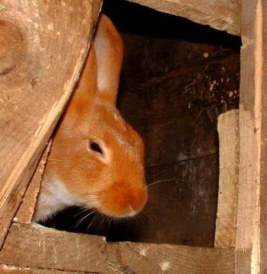 Image : Lapin - Le lapin dans sa cage