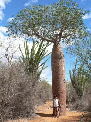 Image : Baobab - Baobab