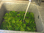 Velouté d'épinards aux tomates - 1.1