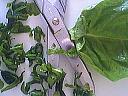 Saumon en papillotes - 5.1