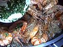 Salade tiède de moules aux primevères - 3.1