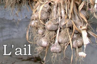 Image : Ail - Gousses et têtes de l'ail