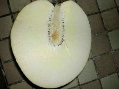 fruit arbre à pain