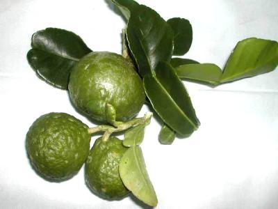 Image : Combava - Des combavas et leurs feuilles