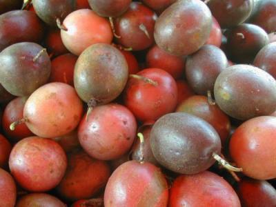 Image : Fruit de la passion ou Grenadille - Fruits de la passion