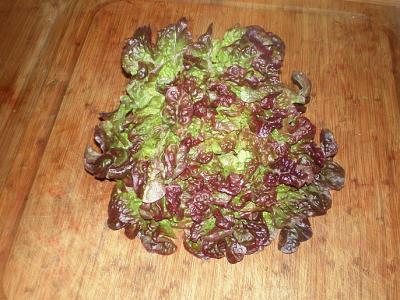 laitue feuilles de chêne rouge