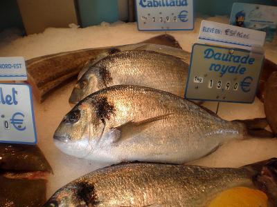 Image : Poisson - La daurade (poisson)