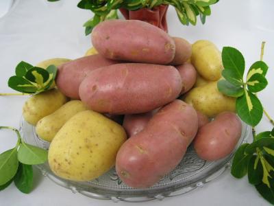 Image : Pomme de terre - Pomme de terre