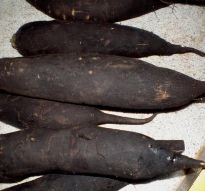 Image : Radis noir - Des radis noirs