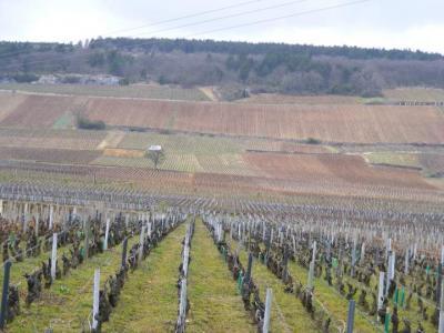 Image : Cuisine bourguignonne - Vignes de Bourgogne