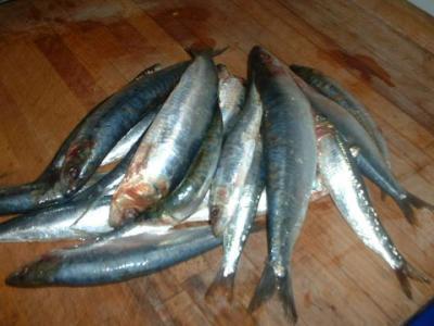 sardines