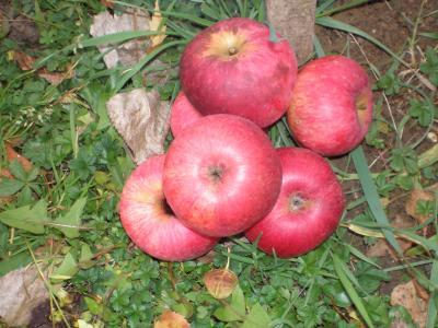 Pomme Gendreville