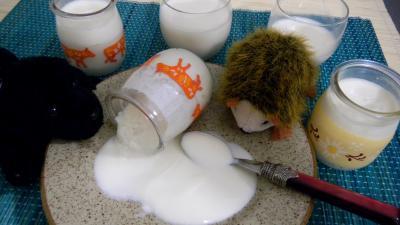 yaourt aromatisé : Pots de yarouts à la vanille en yaourtière